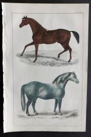 Goldsmith 1851 Hand Col Print. Race Horse, Cart Horse
